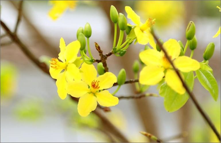 【越南過年系列】春來花開